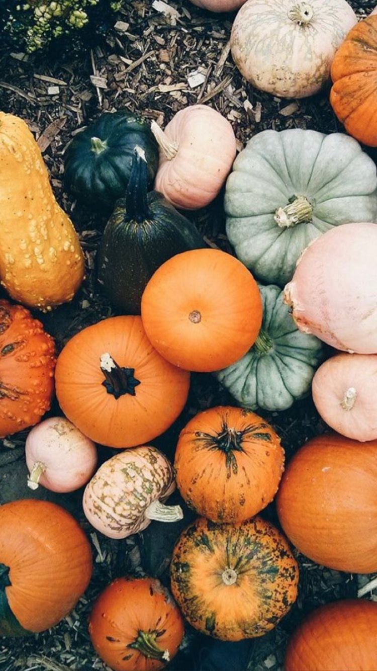 Pumpkin Tumblr Wallpapers Top Free Pumpkin Tumblr Backgrounds Wallpaperaccess