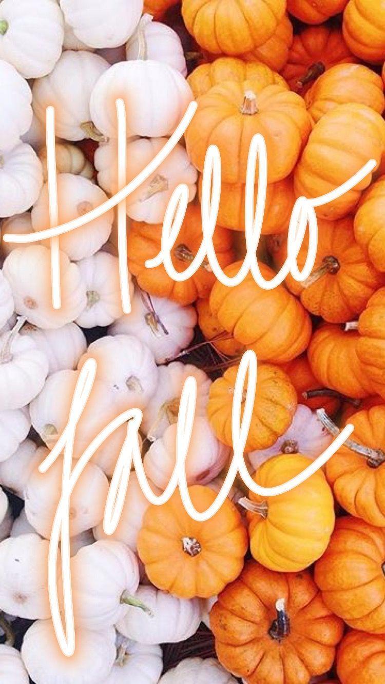Pumpkin Tumblr Wallpapers Top Free Pumpkin Tumblr Backgrounds Wallpaperaccess