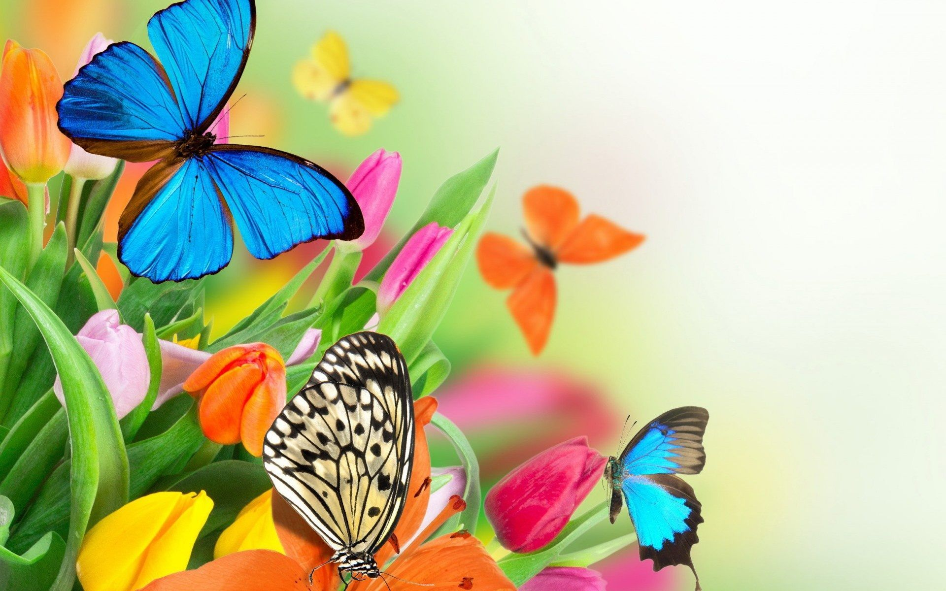 Colorful Butterfly Wallpapers Top Free Colorful Butterfly