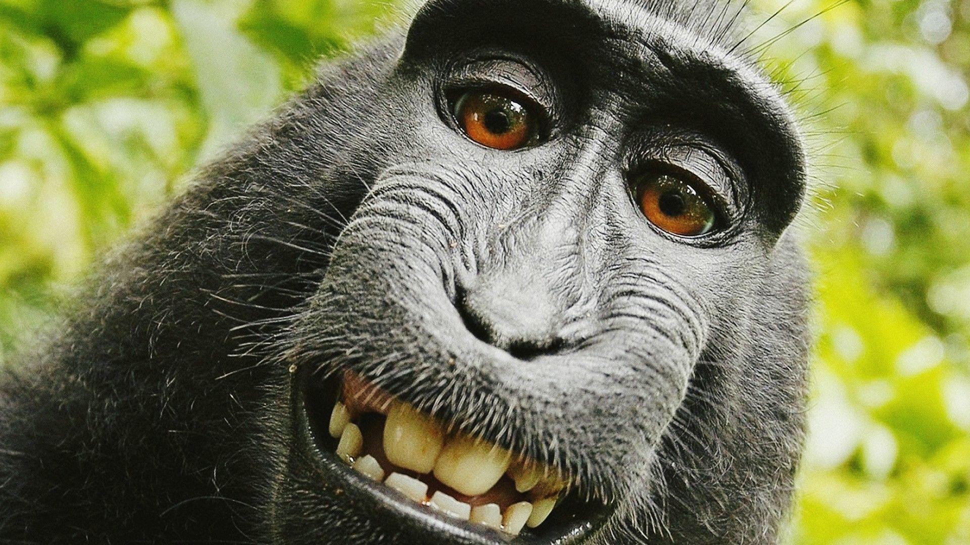 Monkey Wallpapers Top Free Monkey Backgrounds Wallpaperaccess