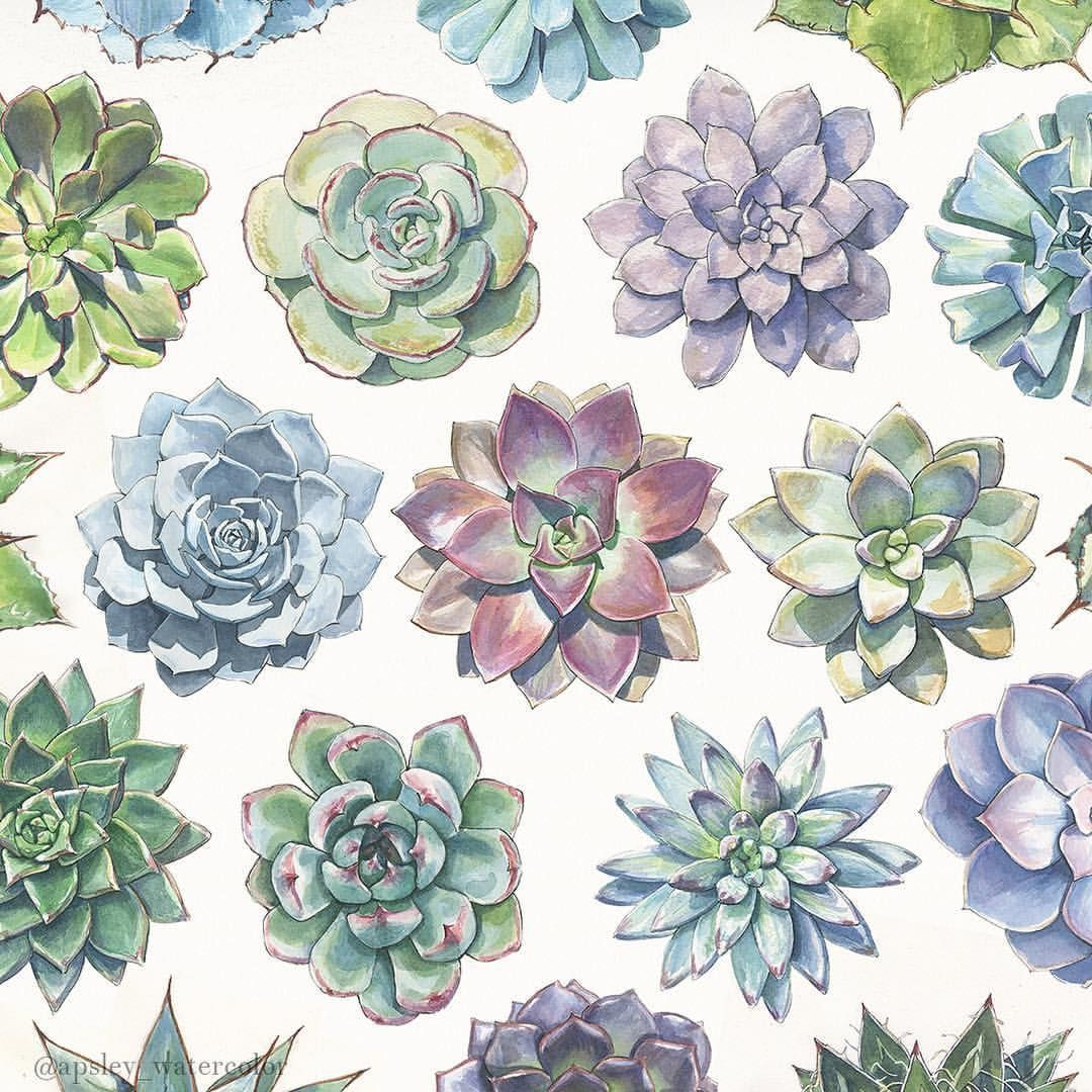 Succulent Wallpapers Top Free Succulent Backgrounds Wallpaperaccess