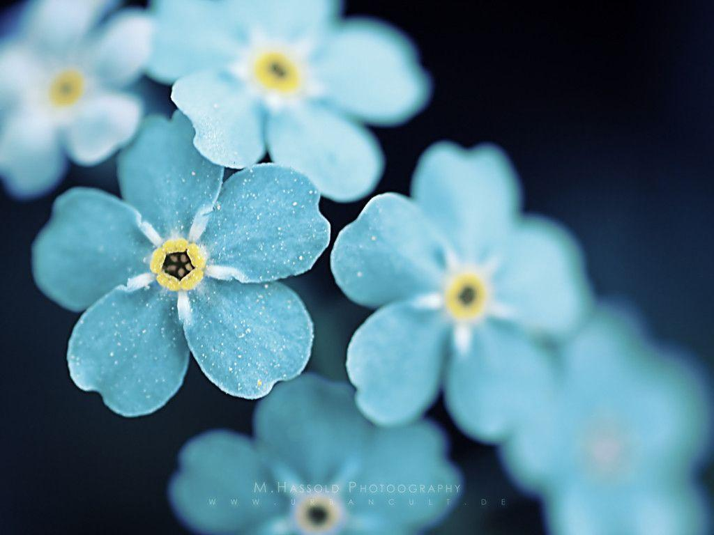 Pretty Flowers Wallpapers - Top Free