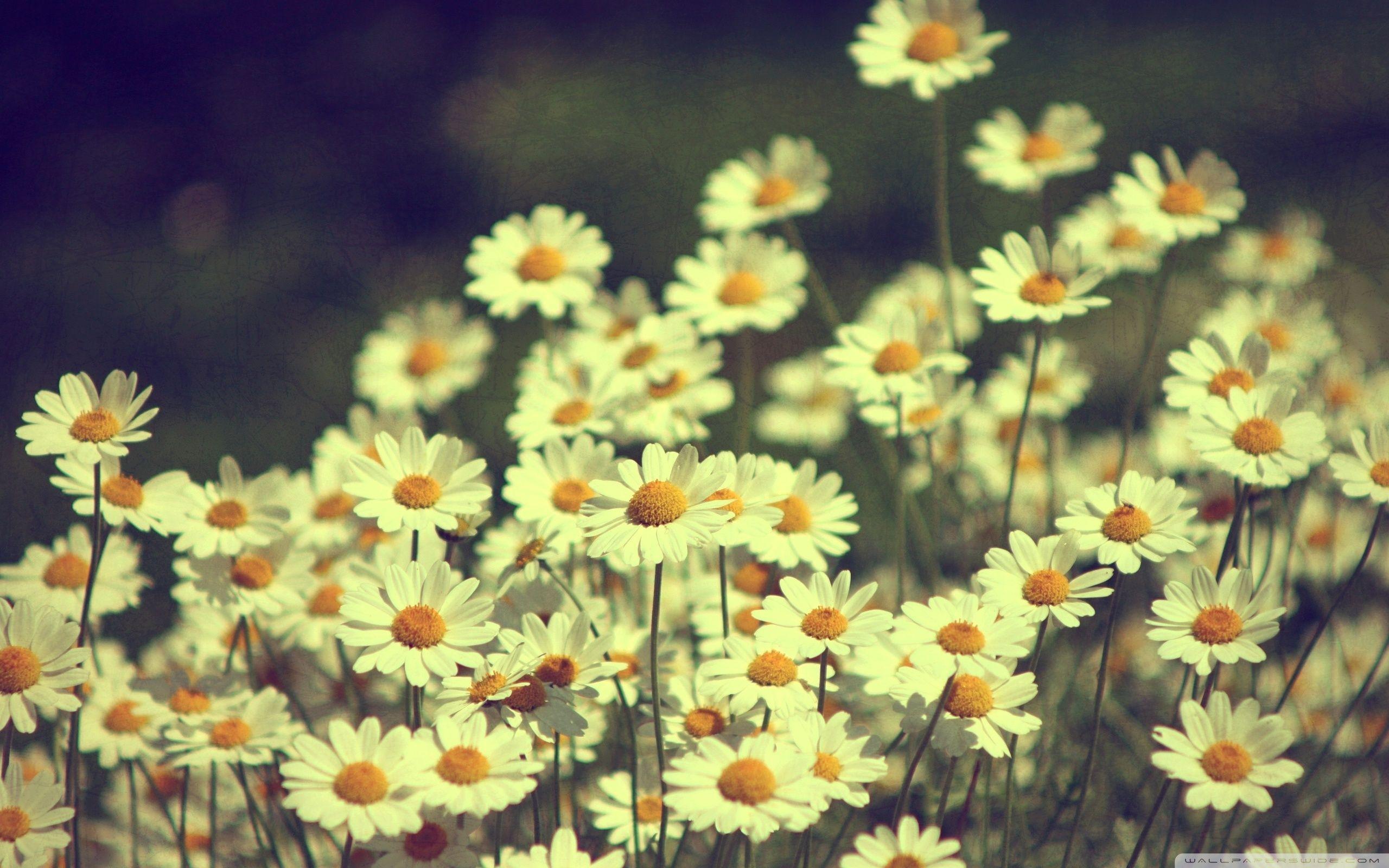 Flores Papel De Parede Pc Tumblr - papel de parede digital