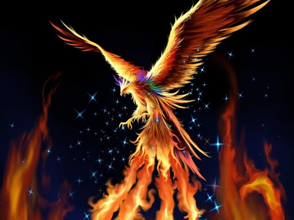 Phoenix Bird Hd Wallpapers Top Free Phoenix Bird Hd Backgrounds Wallpaperaccess
