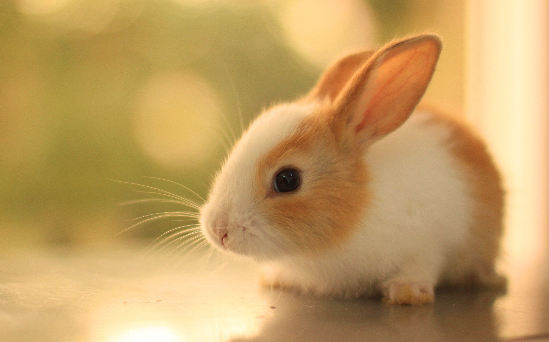 bunny cute rabbits wallpapers desktop phone backgrounds tablet graphics wallpaperaccess rabbit creative