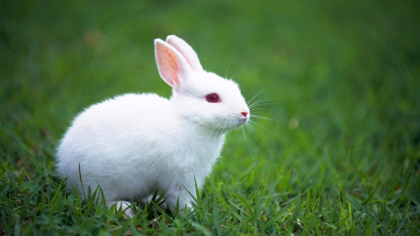 Cute Bunny Rabbits Wallpapers Top Free Cute Bunny Rabbits