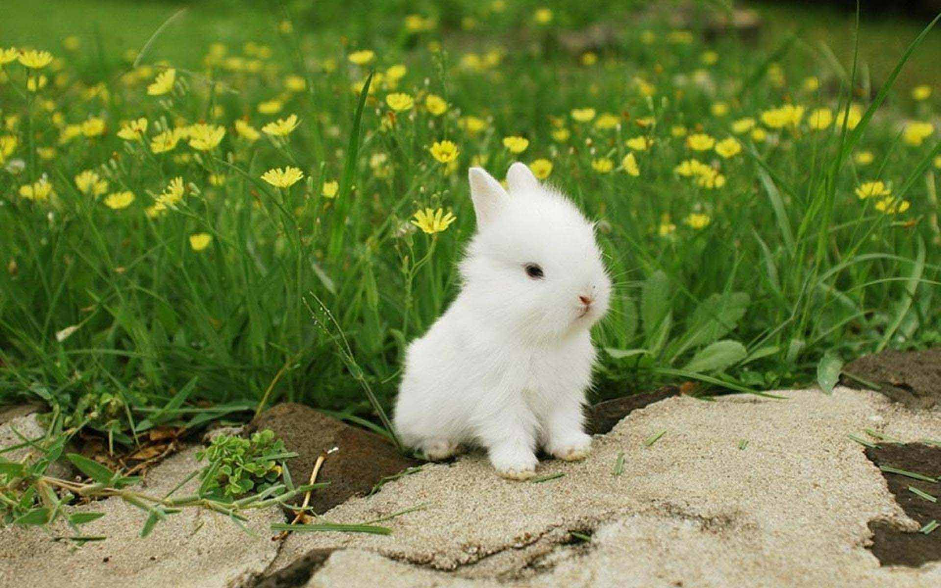 Cute Bunny Wallpapers - Top Free Cute ...