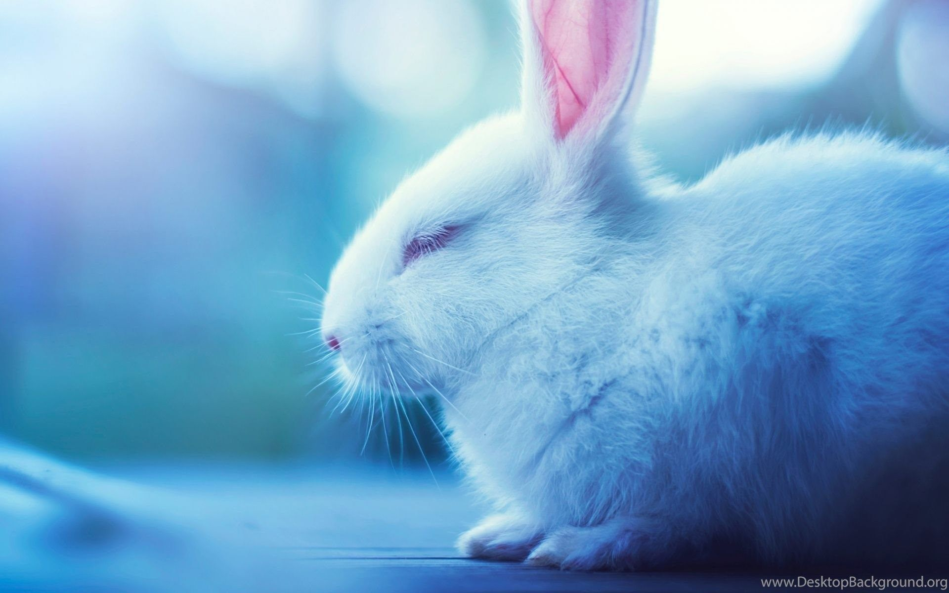 Cute Bunny Desktop Wallpapers Top Free Cute Bunny Desktop