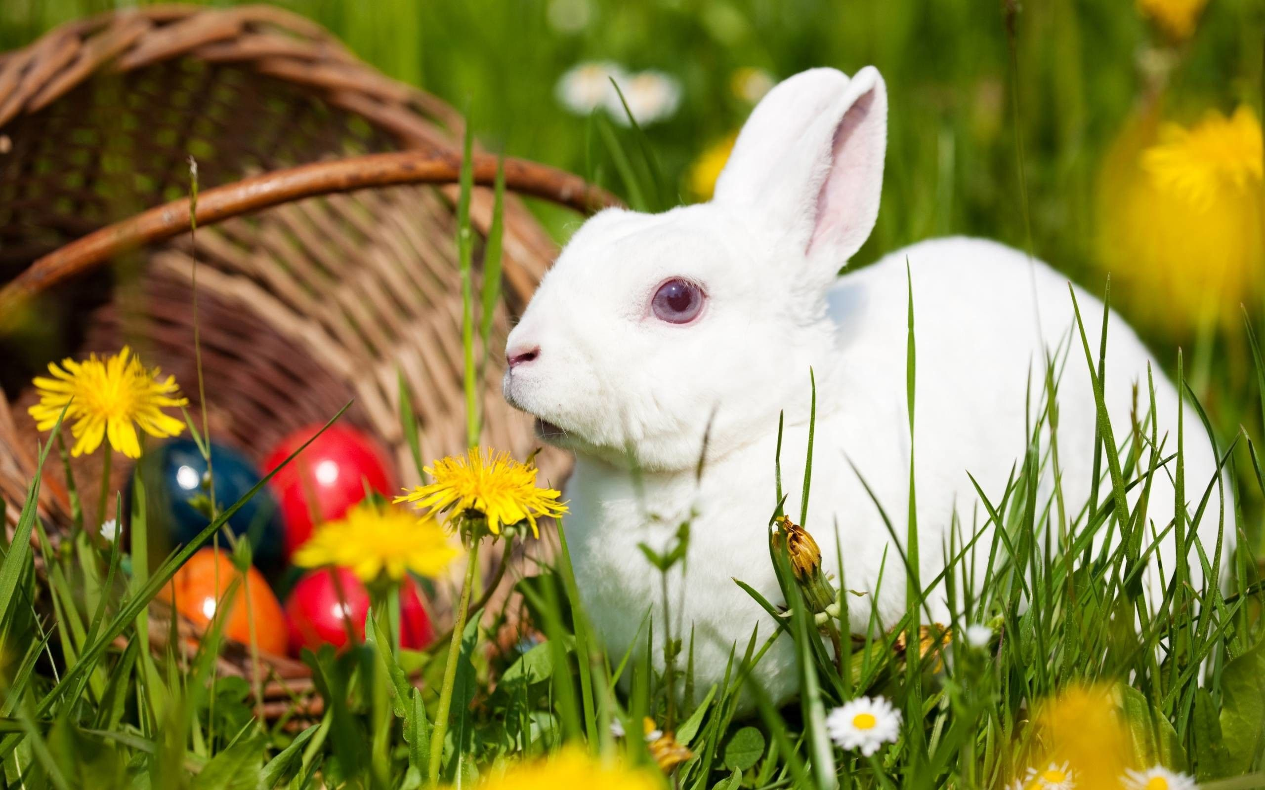 74 best free cute bunny rabbits wallpapers - wallpaperaccess