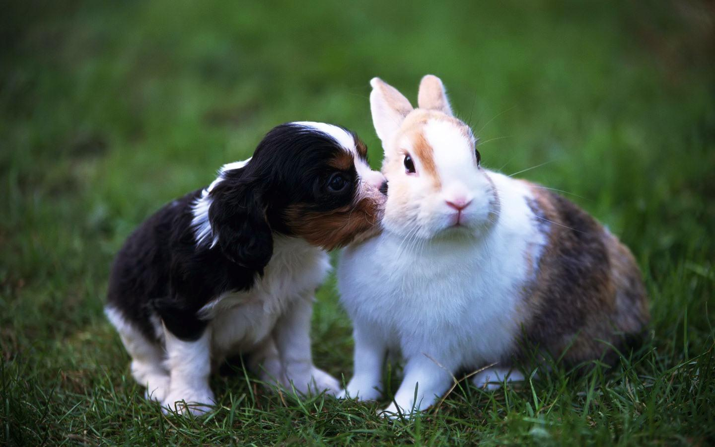 74 Best Free Cute Bunny Rabbits Wallpapers