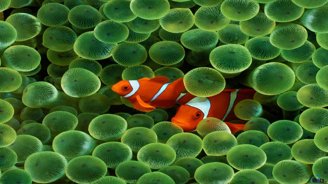 Dual Screen Fish Wallpapers Top Free Dual Screen Fish