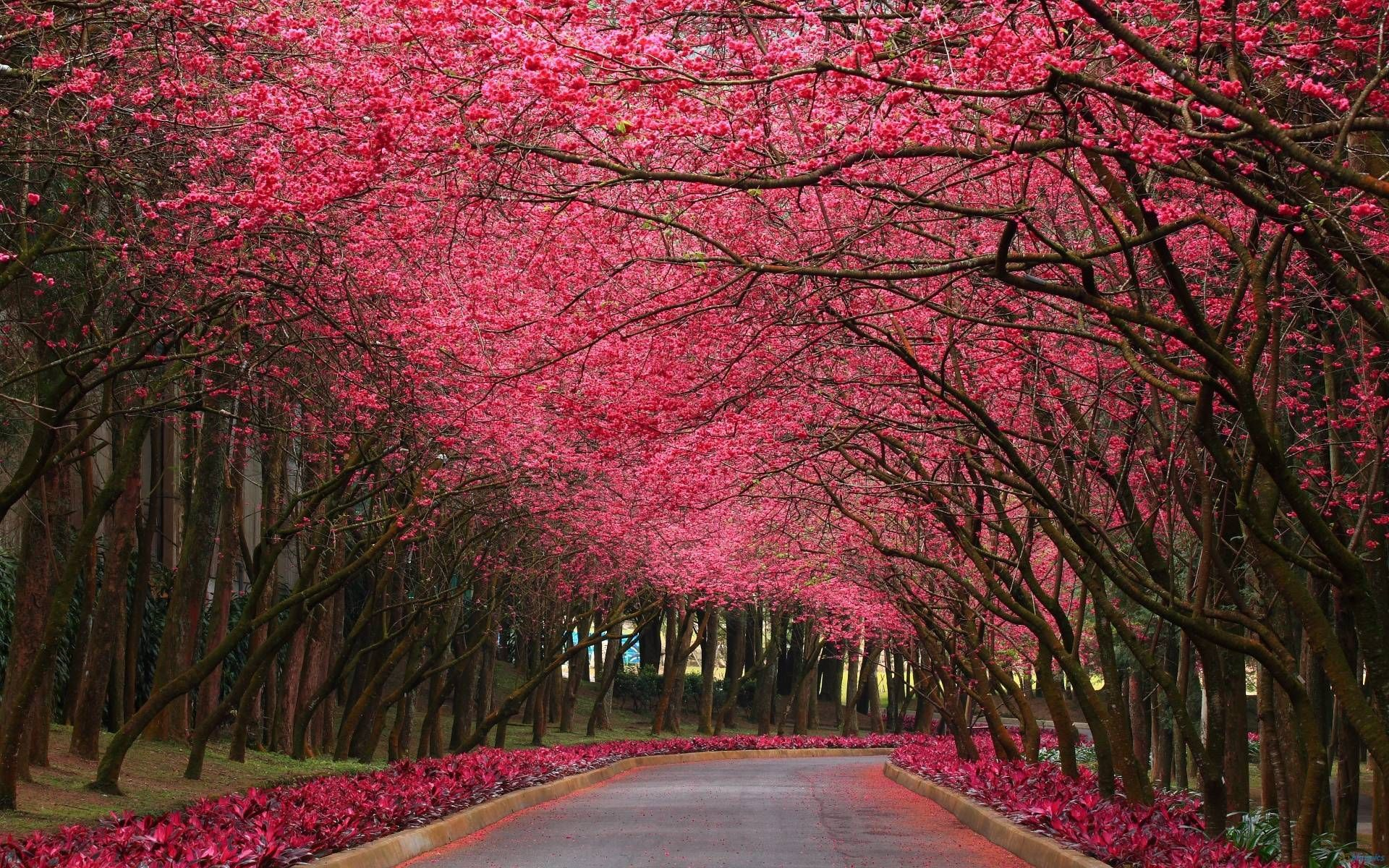Pink Forest Wallpapers Top Free Pink Forest Backgrounds Wallpaperaccess