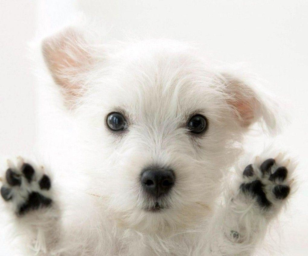 Beautiful Dog Wallpapers Top Free Beautiful Dog