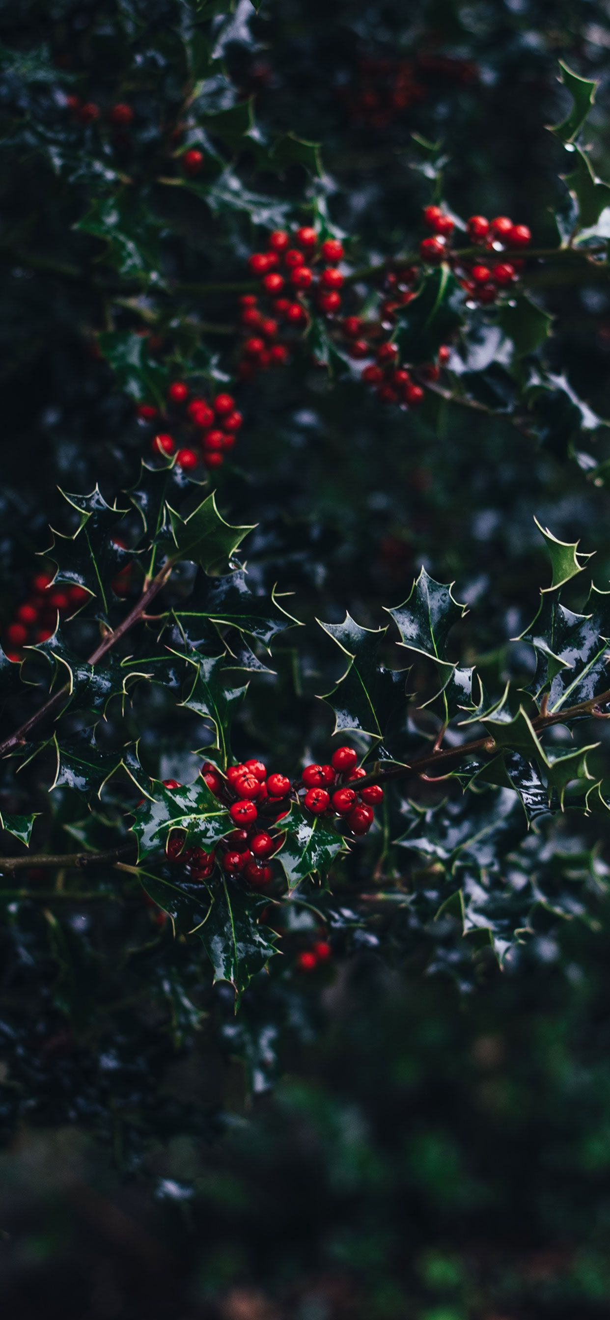Red Aesthetic Christmas Wallpapers Top Free Red Aesthetic Christmas Backgrounds Wallpaperaccess