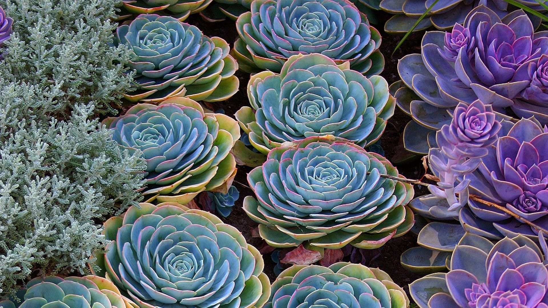 Succulent Desktop Wallpapers Top Free Succulent Desktop