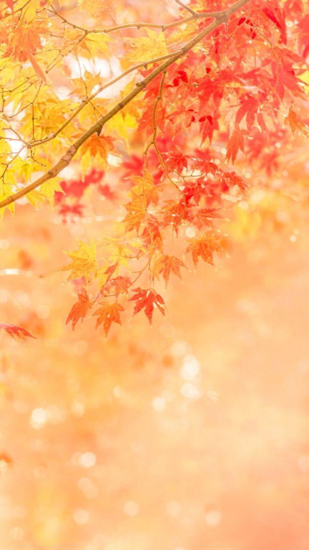 Hình nền kẻ sọc mùa thu 736x1309