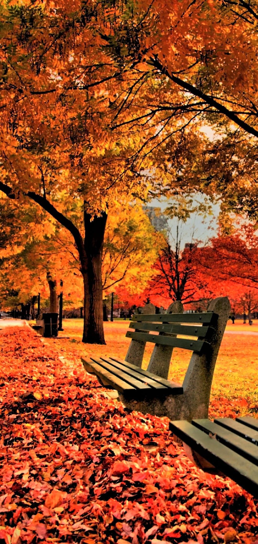 Hình nền Công viên Nhiếp ảnh 1080x2280 (1080x2280)