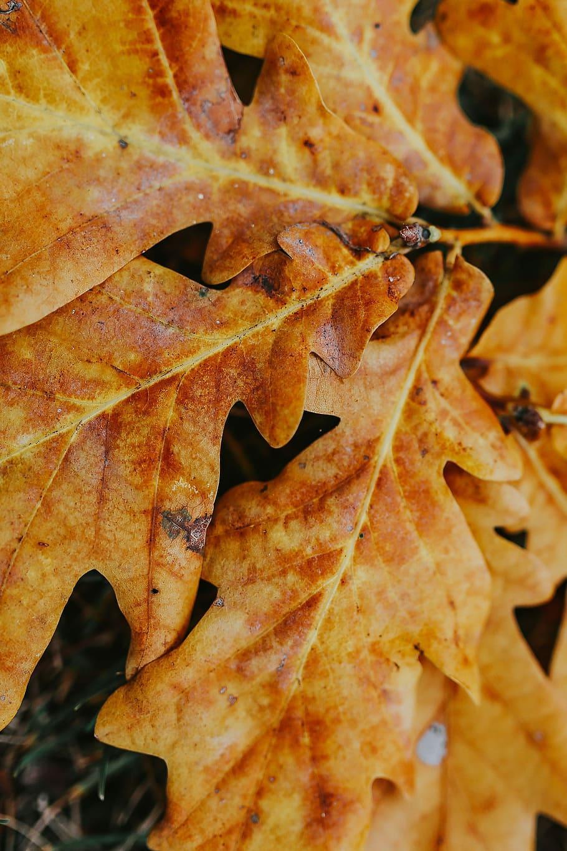 Hình nền HD 910x1365: Lá mùa thu trên mặt đất, màu vàng, điện thoại di động