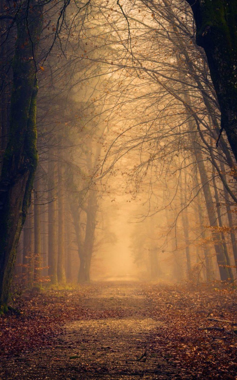 950x1520 Tải xuống Sương mù buổi sáng Rừng mùa thu miễn phí 4K Ultra HD tinh khiết