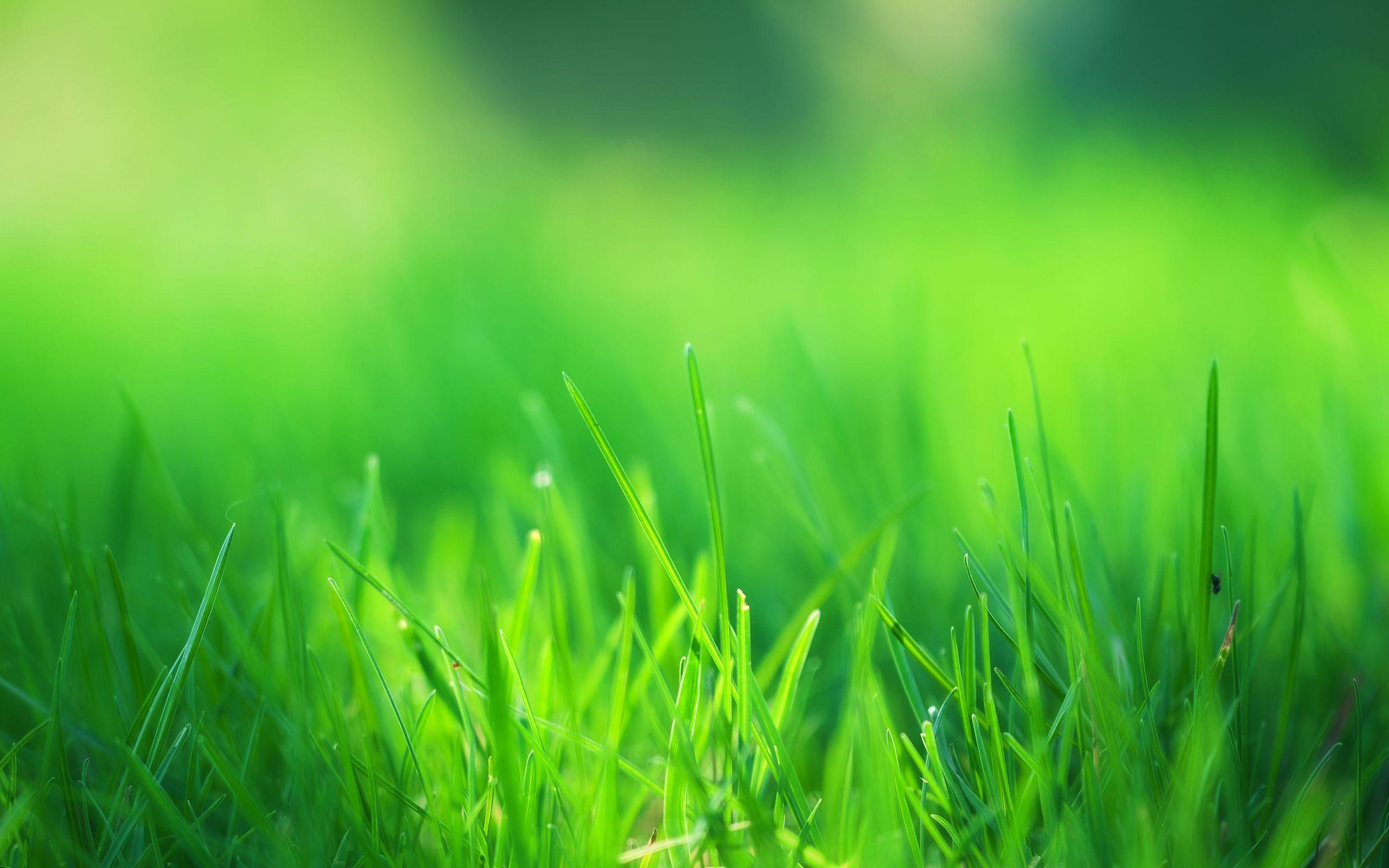 Green Grass Wallpapers Top Free Green Grass Backgrounds Wallpaperaccess