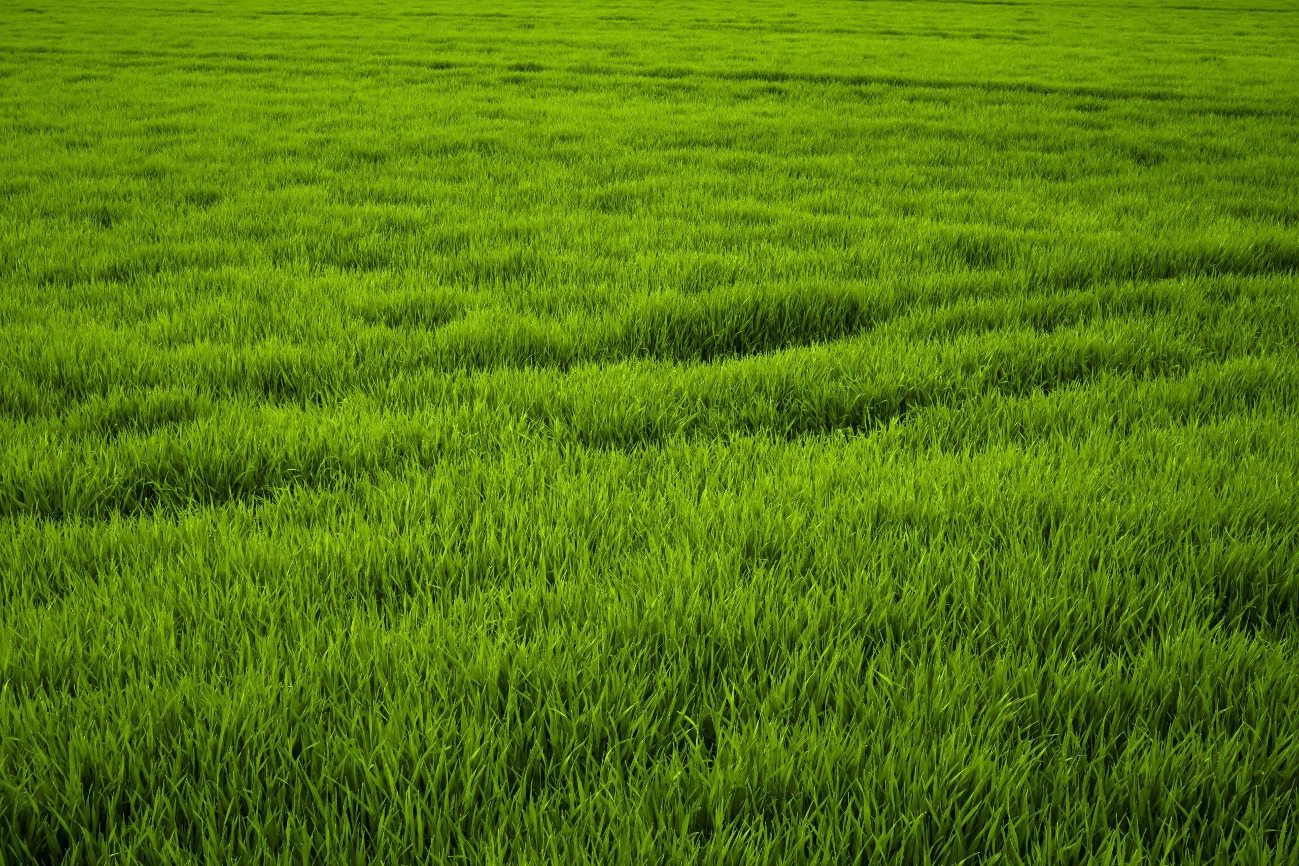 23+ Green Grass Wallpaper Pics