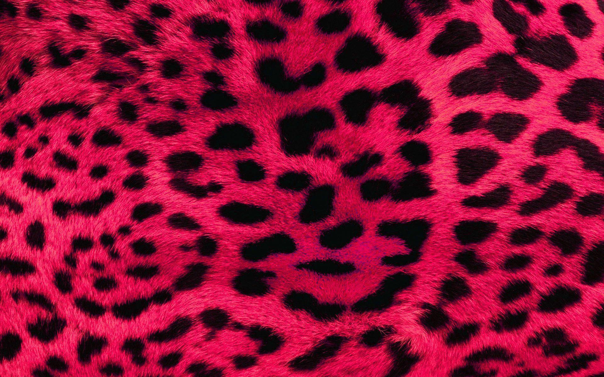 1920x1200 Pink Leopard hình nền
