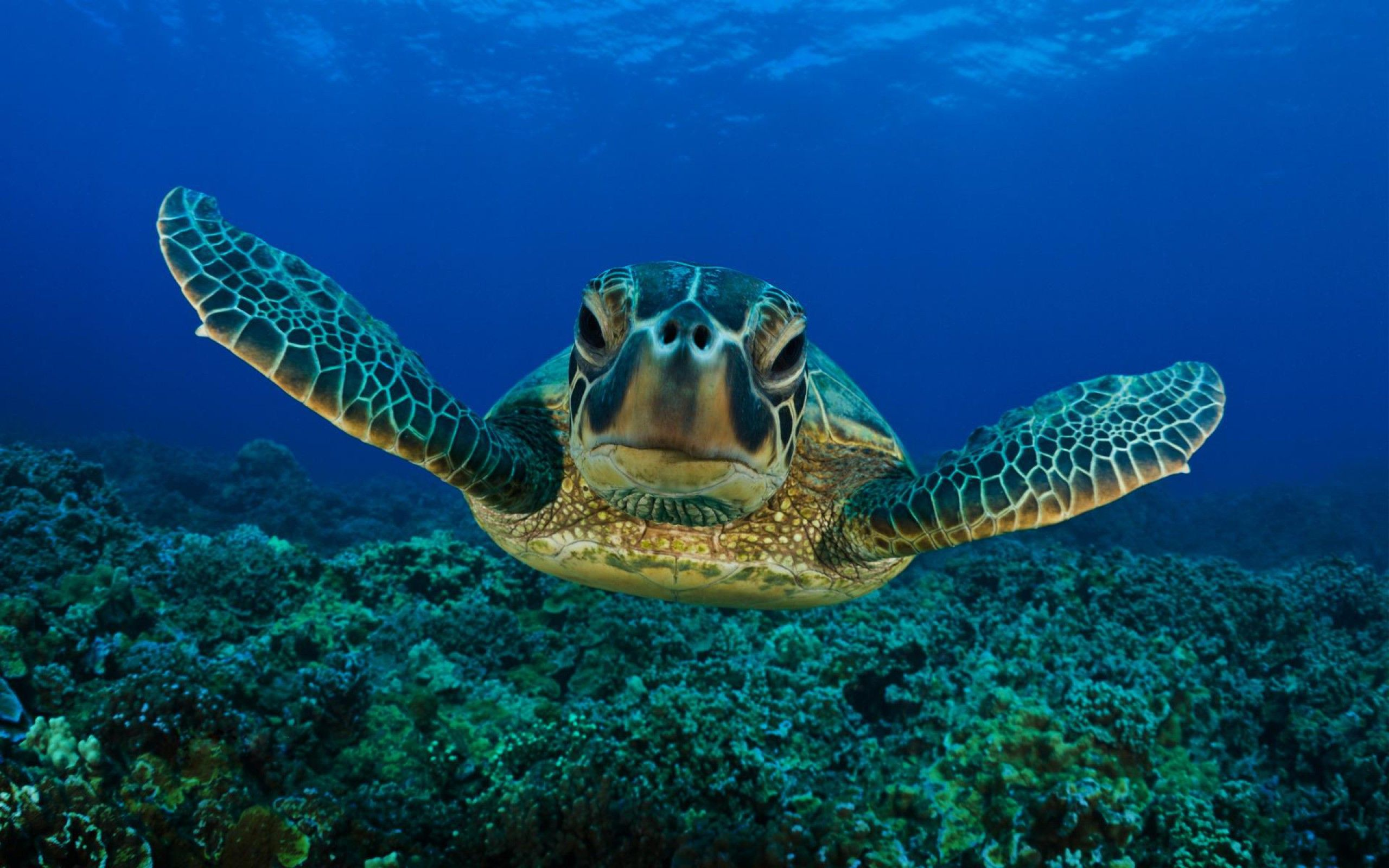 "1920x1200 Turtle Wallpaper #10155"">"
