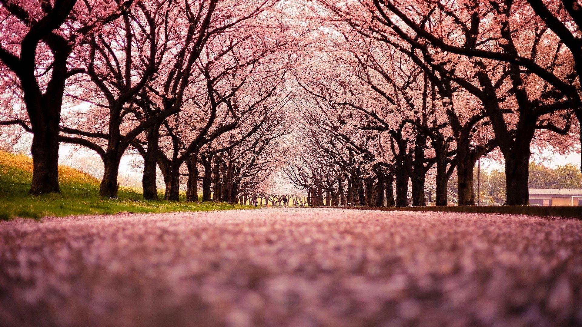 Japanese Hd Desktop Wallpapers Top Free Japanese Hd Desktop Backgrounds Wallpaperaccess