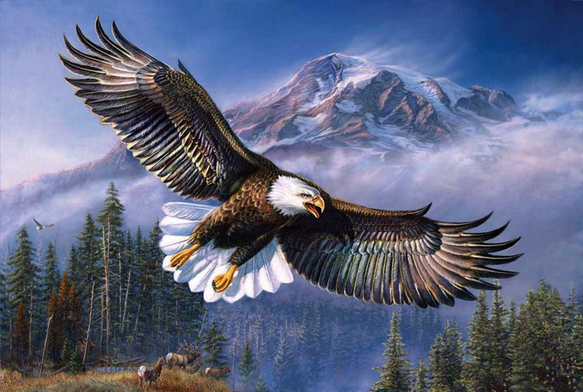 Native American Eagle Hd Wallpapers Top Free Native American Eagle Hd Backgrounds Wallpaperaccess