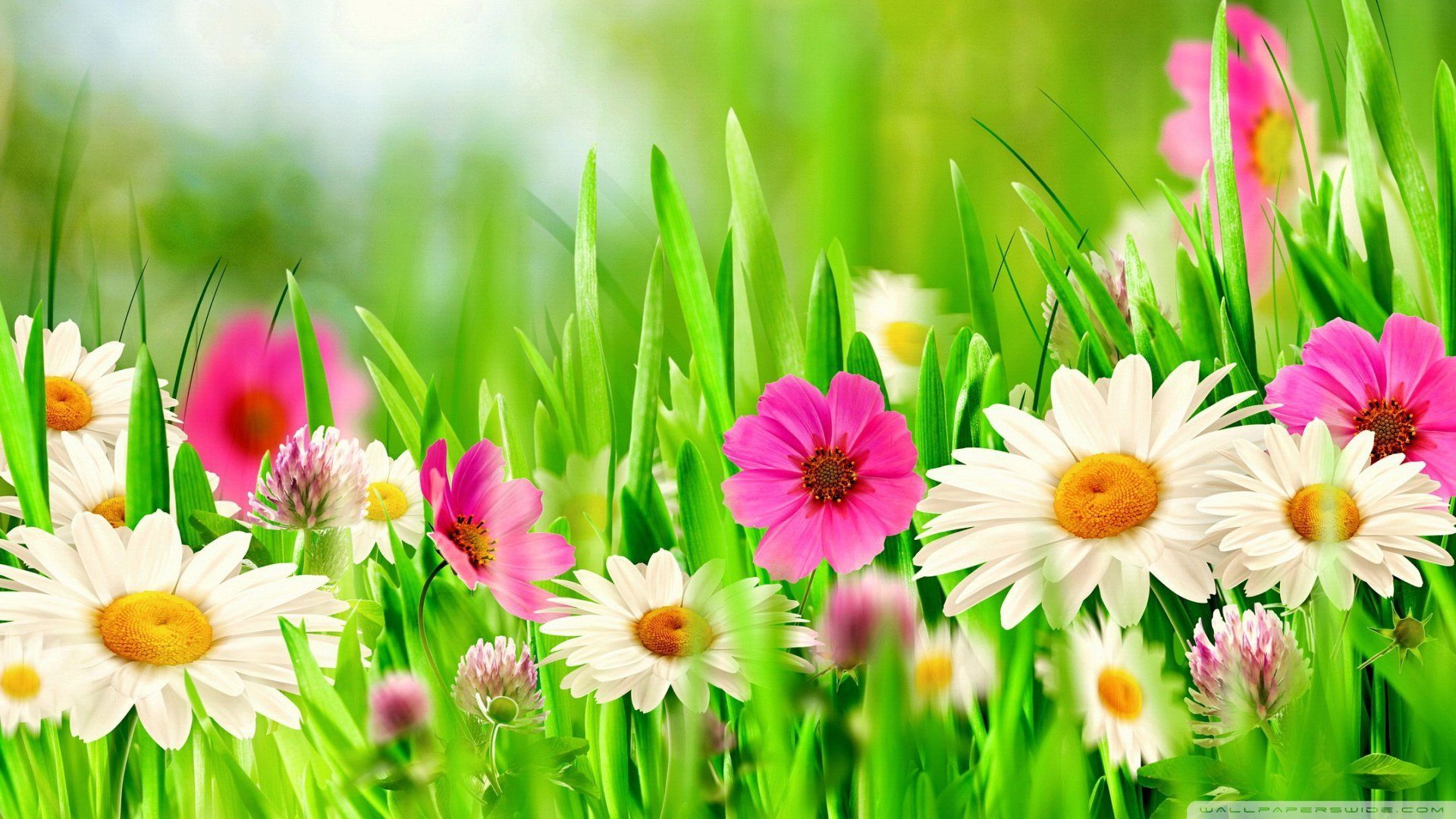 Full hd flower wallpapers top free full hd flower for Immagini full hd 1920x1080