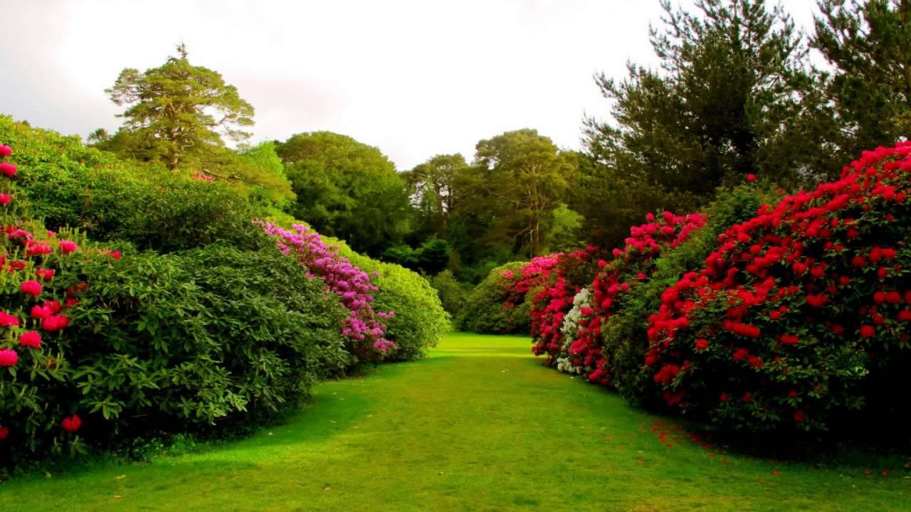 Garden Wallpapers Top Free Garden Backgrounds Wallpaperaccess
