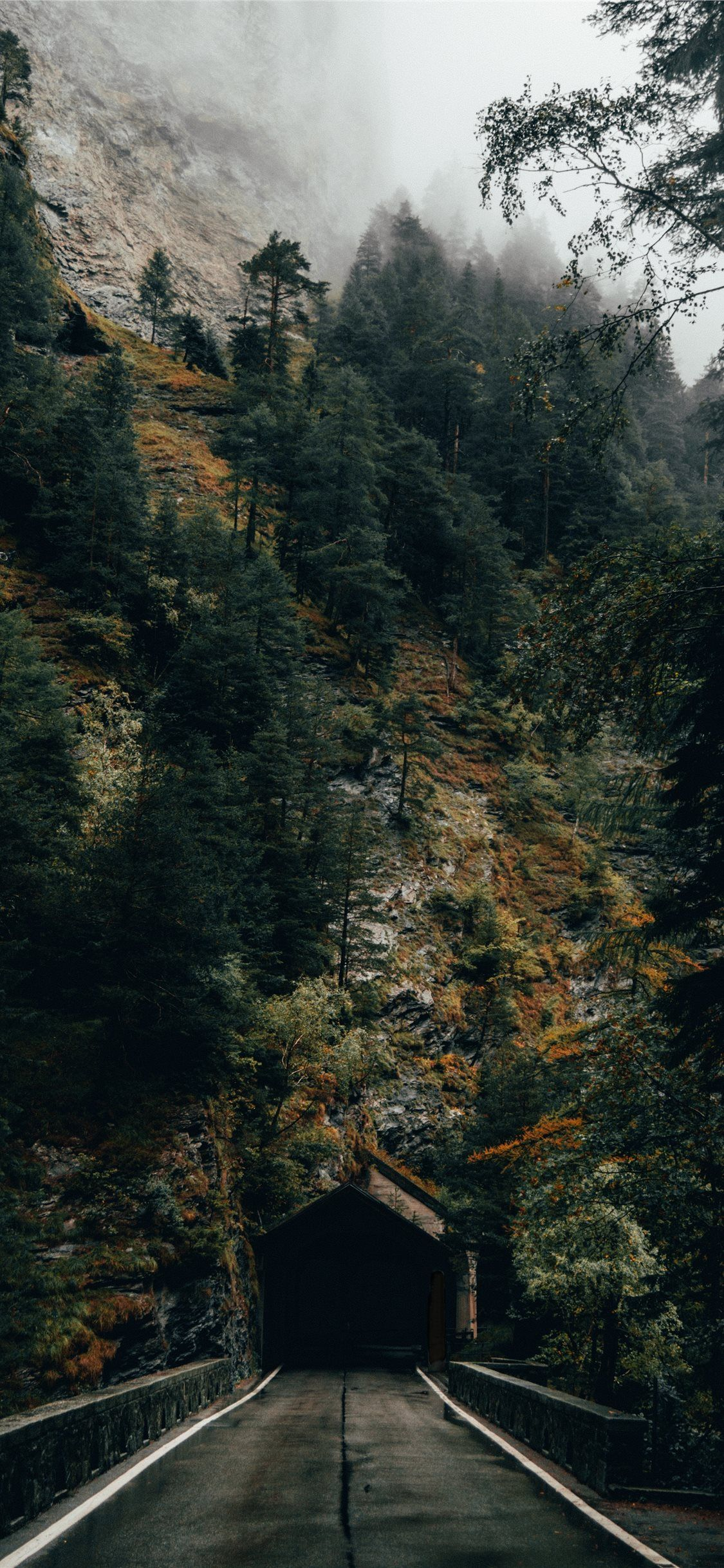 Wallpaper Iphone Aesthetic Forest Total Update
