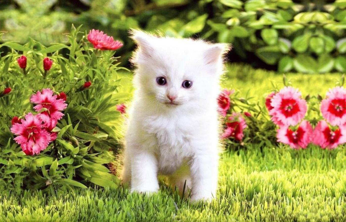42 Best Free Cats And Kittens Wallpapers Wallpaperaccess