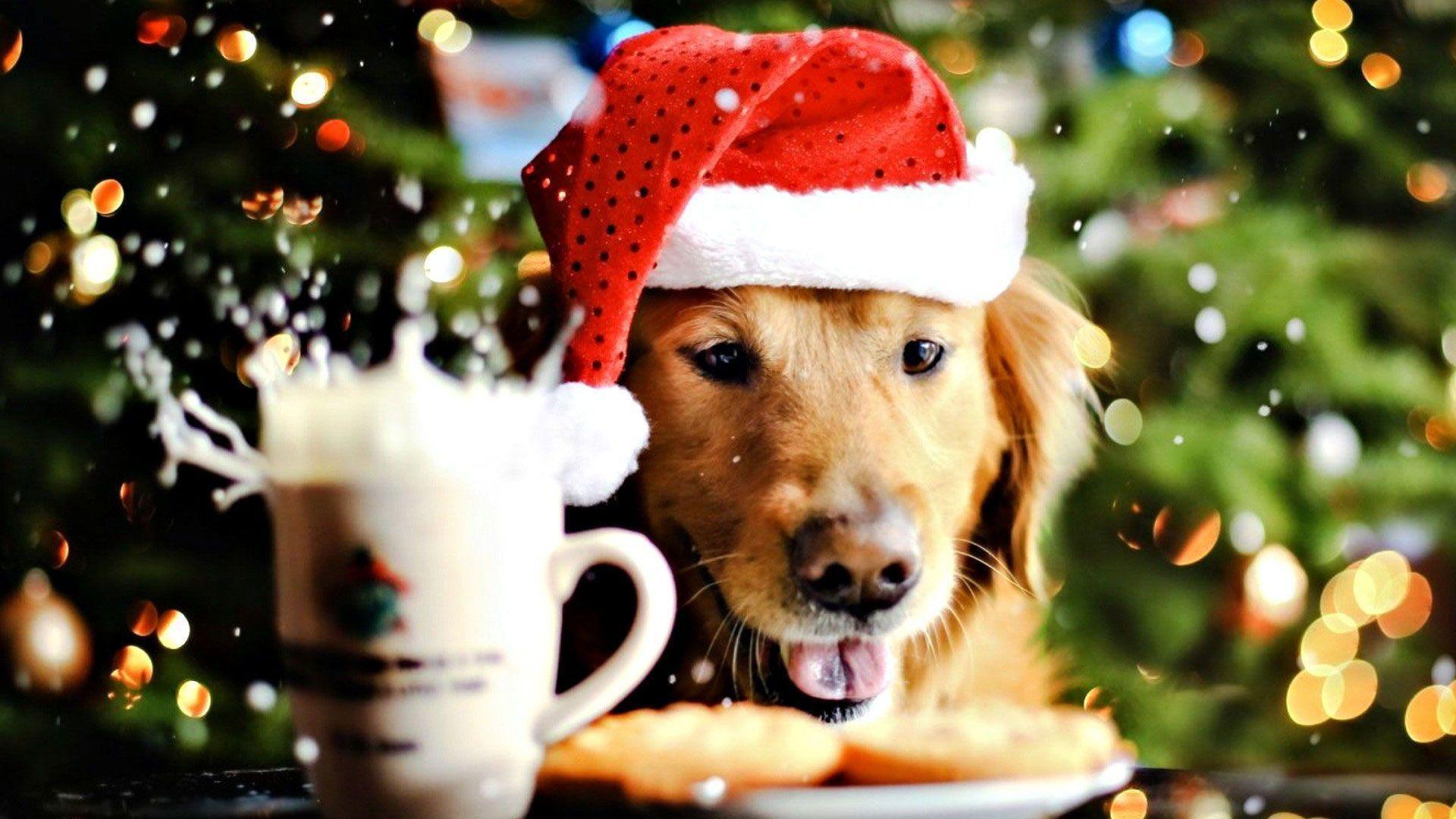 Christmas Animals Wallpapers , Top Free Christmas Animals
