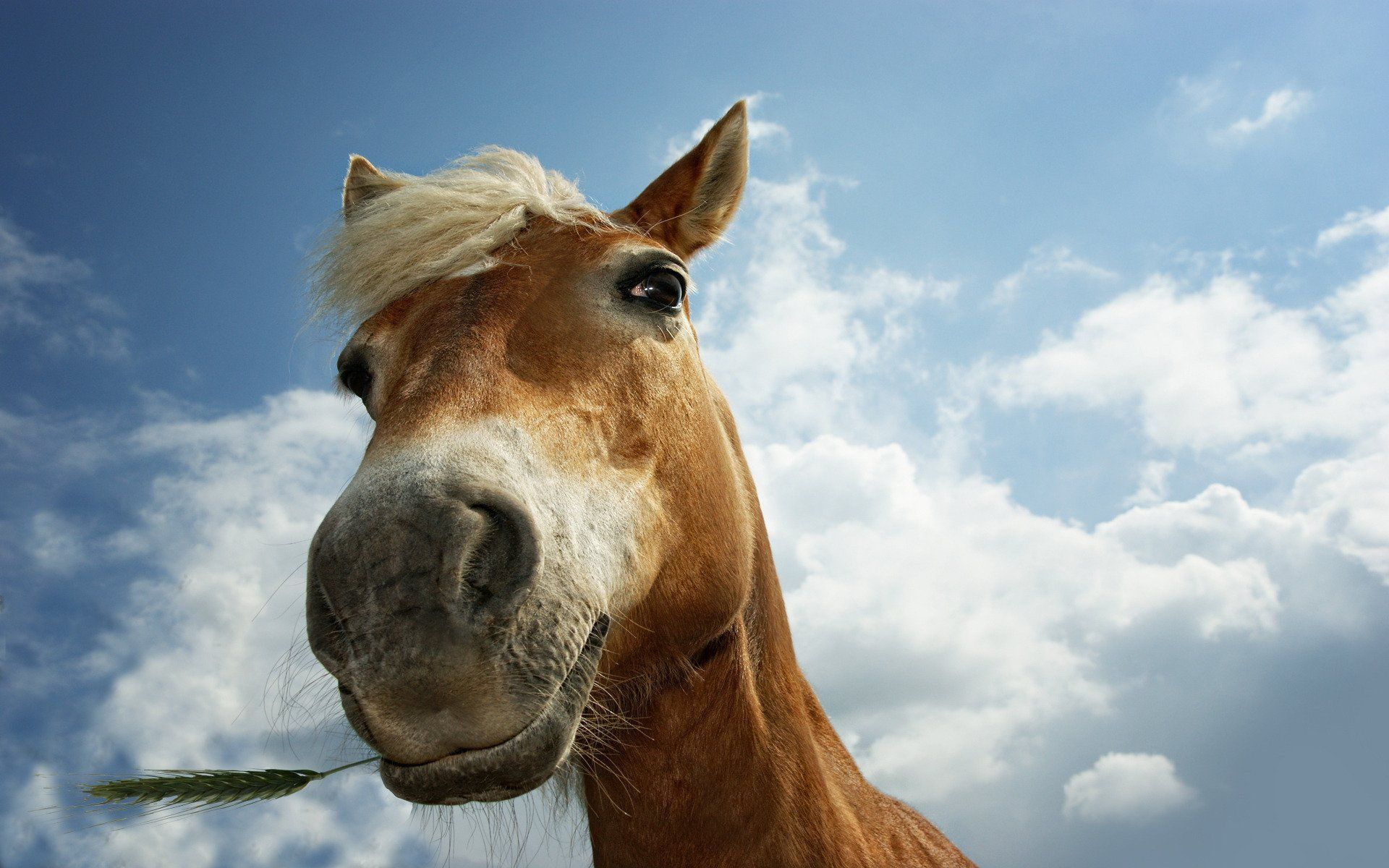 Funny Horse Wallpapers Top Free Funny Horse Backgrounds Wallpaperaccess