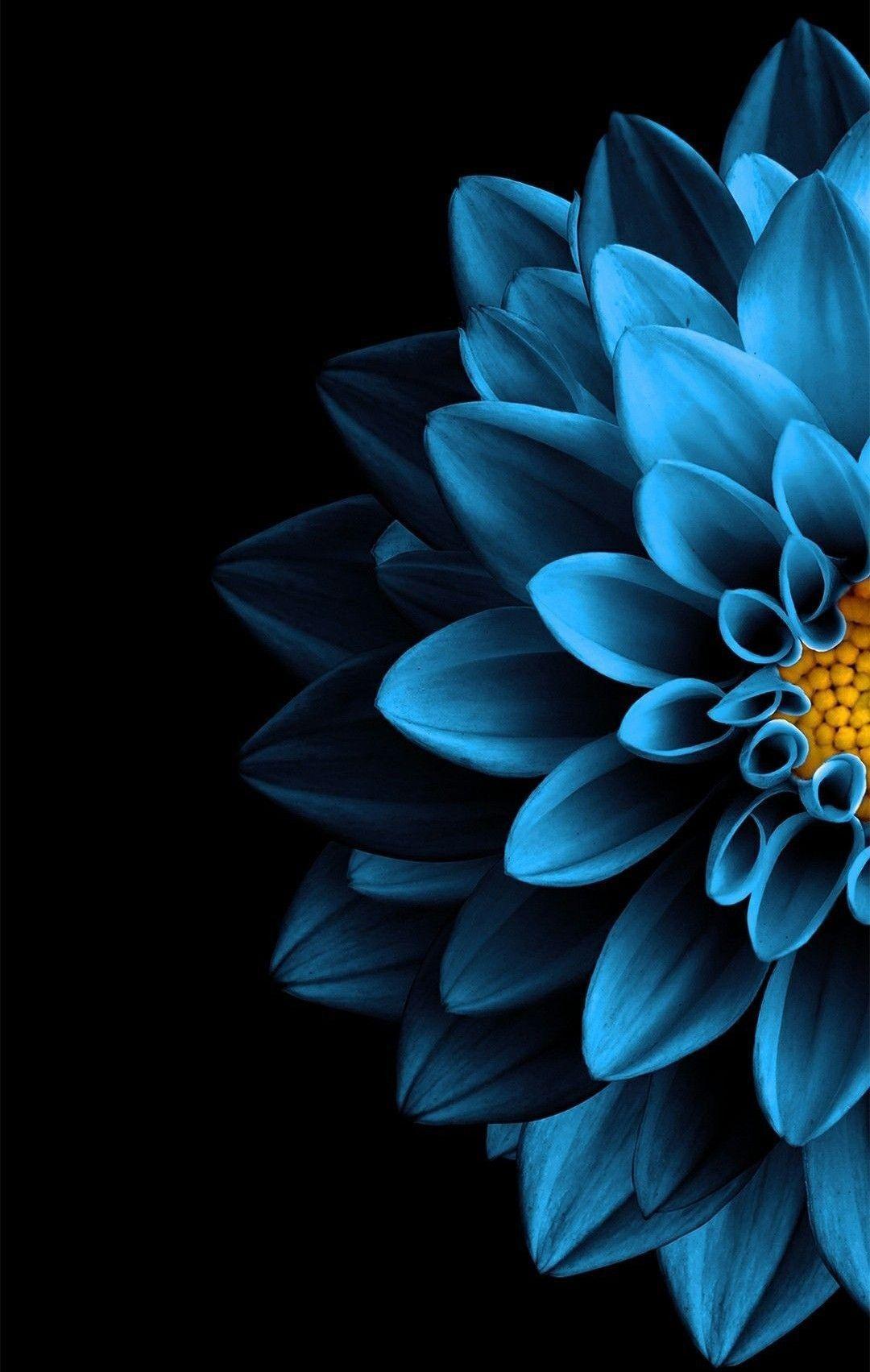 Blue Flowers Phone Wallpapers Top Free Blue Flowers Phone