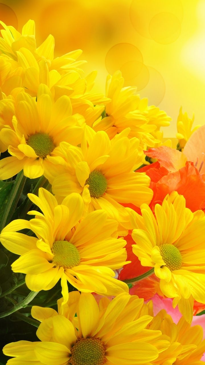 Yellow Flower Phone Wallpapers Top Free Yellow Flower Phone