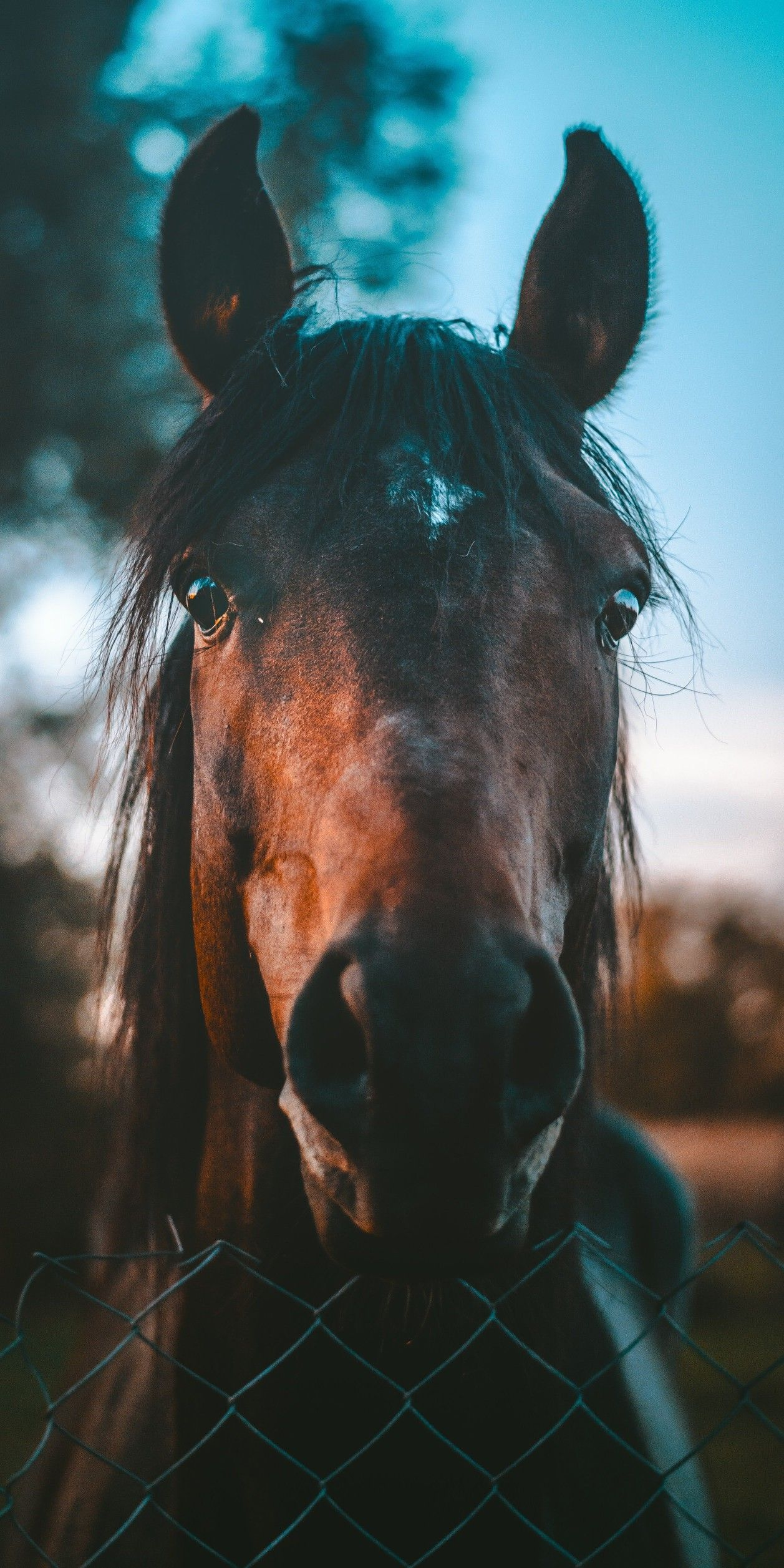 Horse Phone Wallpapers Top Free Horse Phone Backgrounds Wallpaperaccess