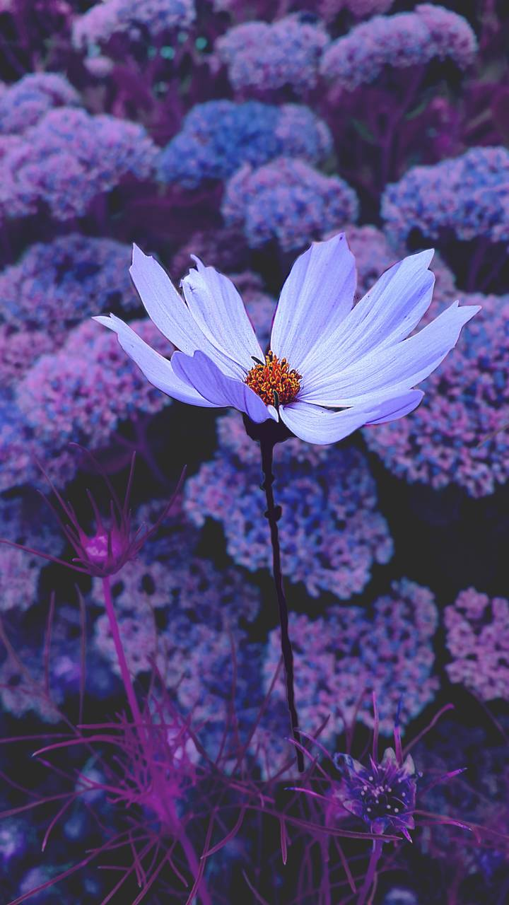 Purple Tumblr Wallpapers Top Free Purple Tumblr Backgrounds Wallpaperaccess