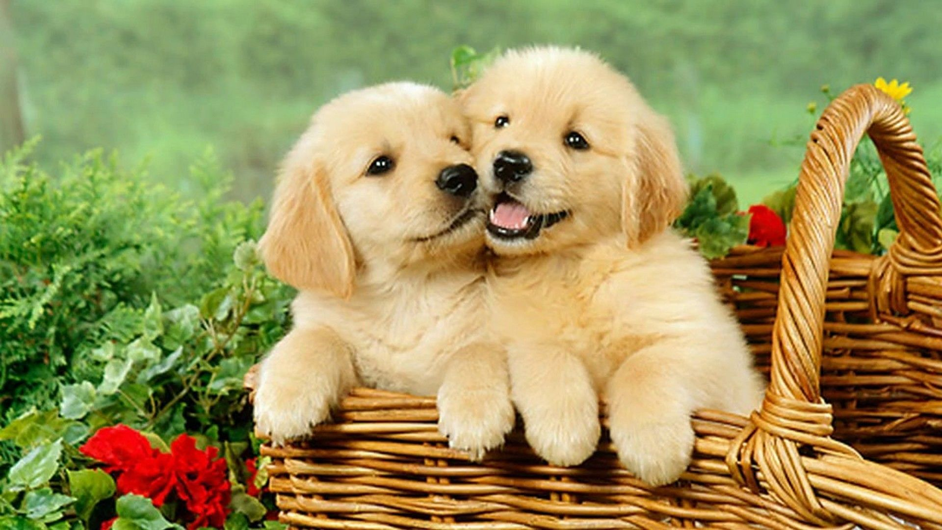 Cute Puppy Desktop Wallpapers - Top