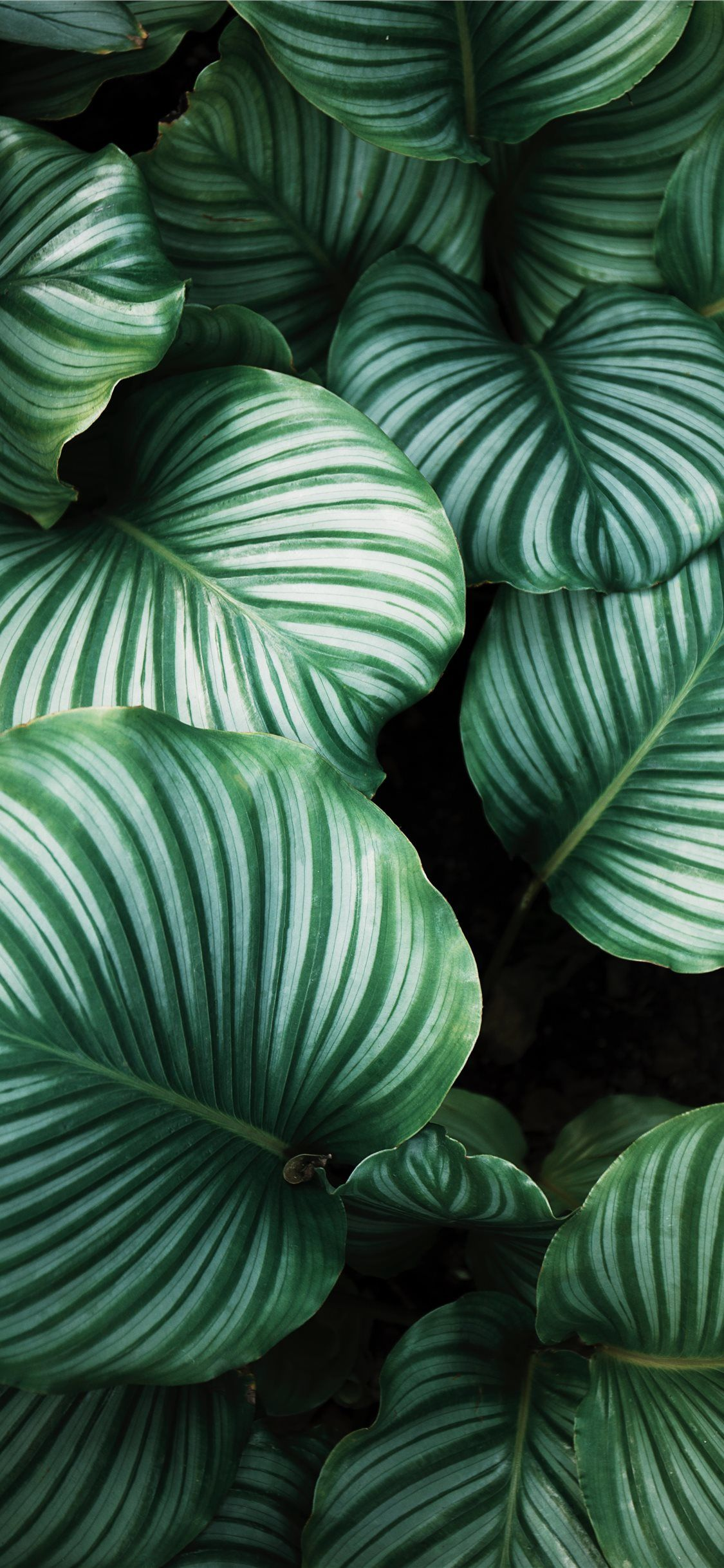 Plant Iphone Wallpapers Top Free Plant Iphone Backgrounds Wallpaperaccess