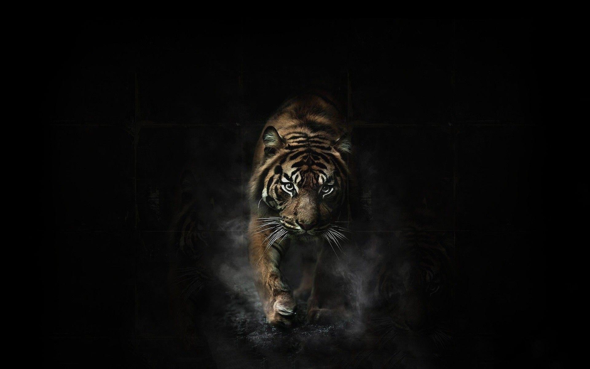 Wallpaper For Laptop Tiger