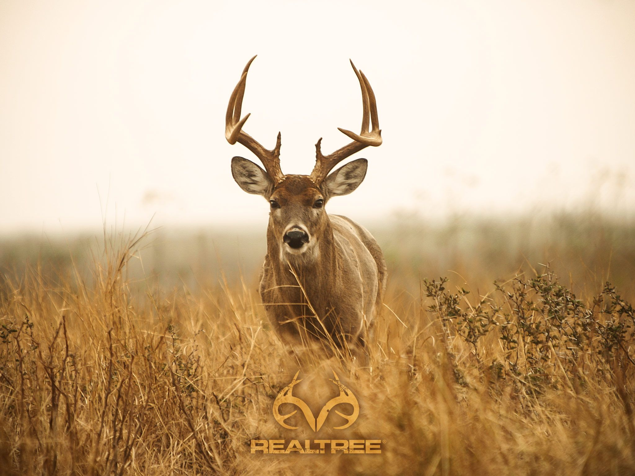3007ca531a2f4 2048x1536 Deer Hunting Desktop. | Decor | Pinterest | Hunting wallpaper and  .