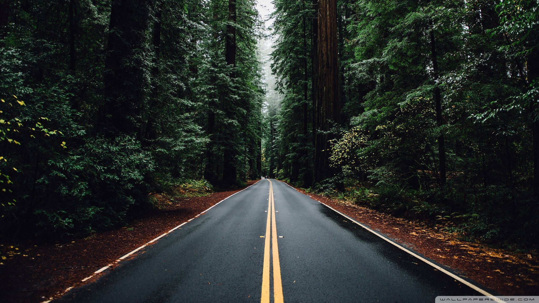 Beautiful Roads Wallpapers Top Free Beautiful Roads Backgrounds Images, Photos, Reviews
