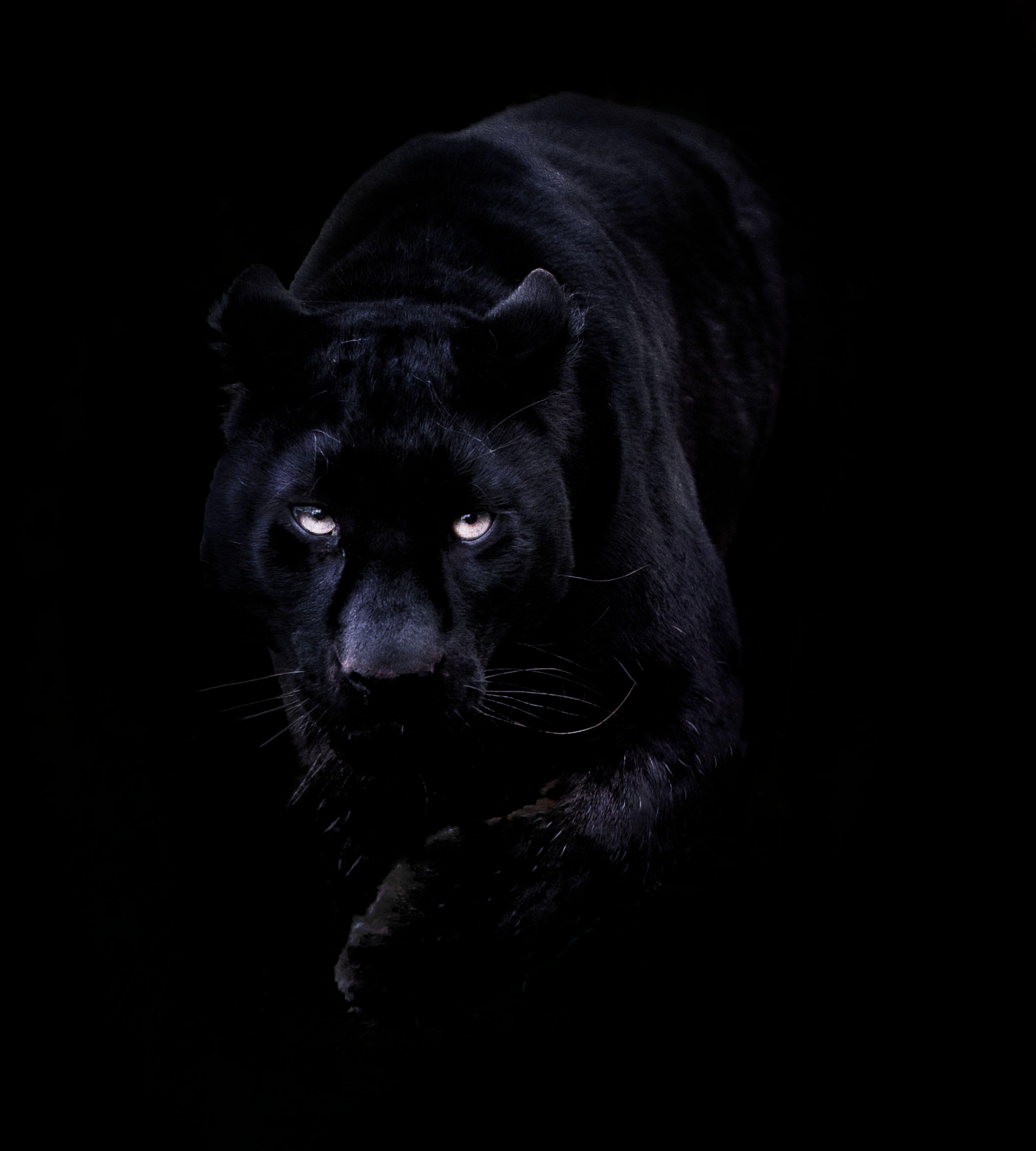 Black Jaguar Hd Wallpapers Top Free Black Jaguar Hd Backgrounds Wallpaperaccess