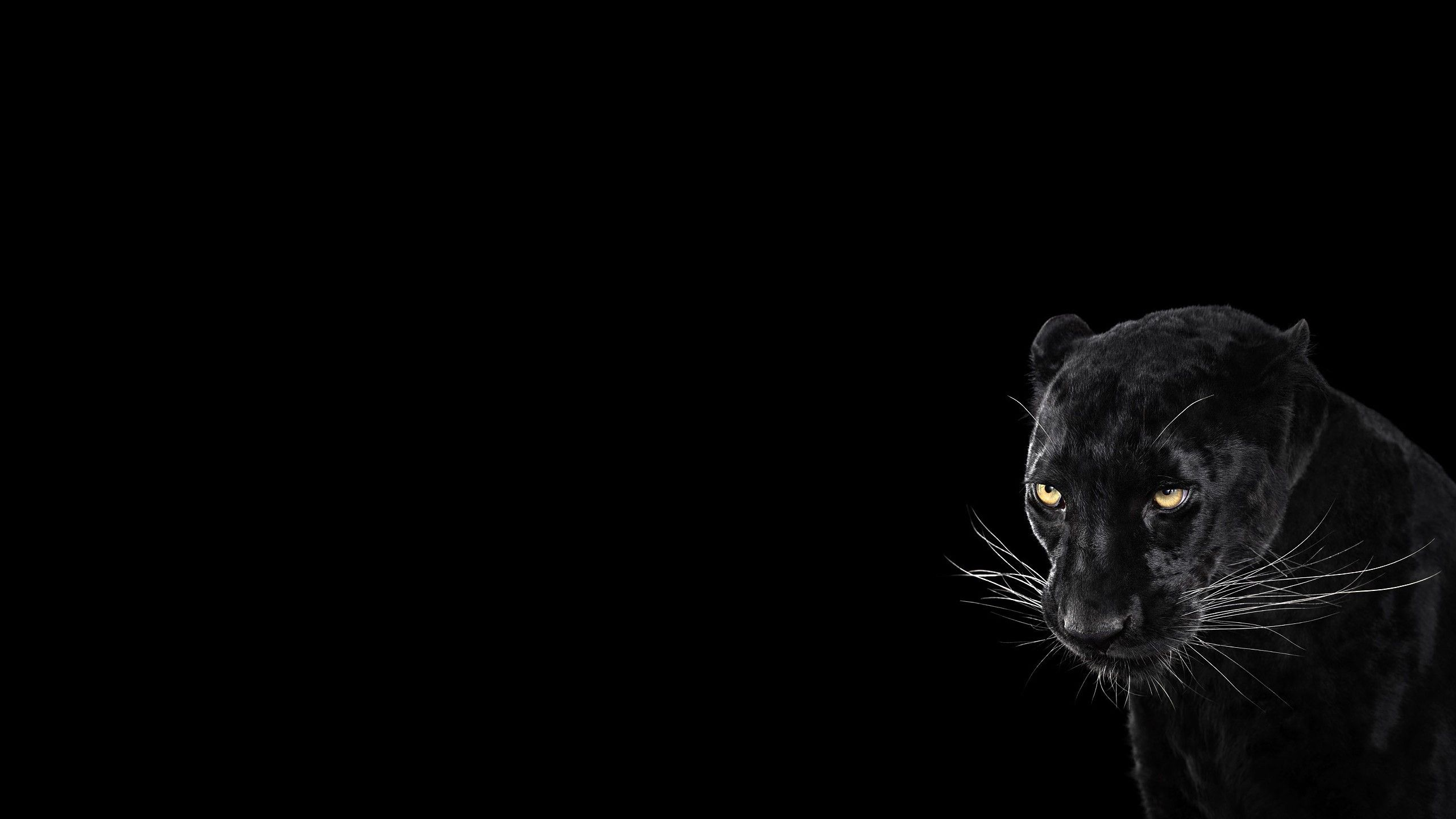 Black Jaguar Wallpaper Hd