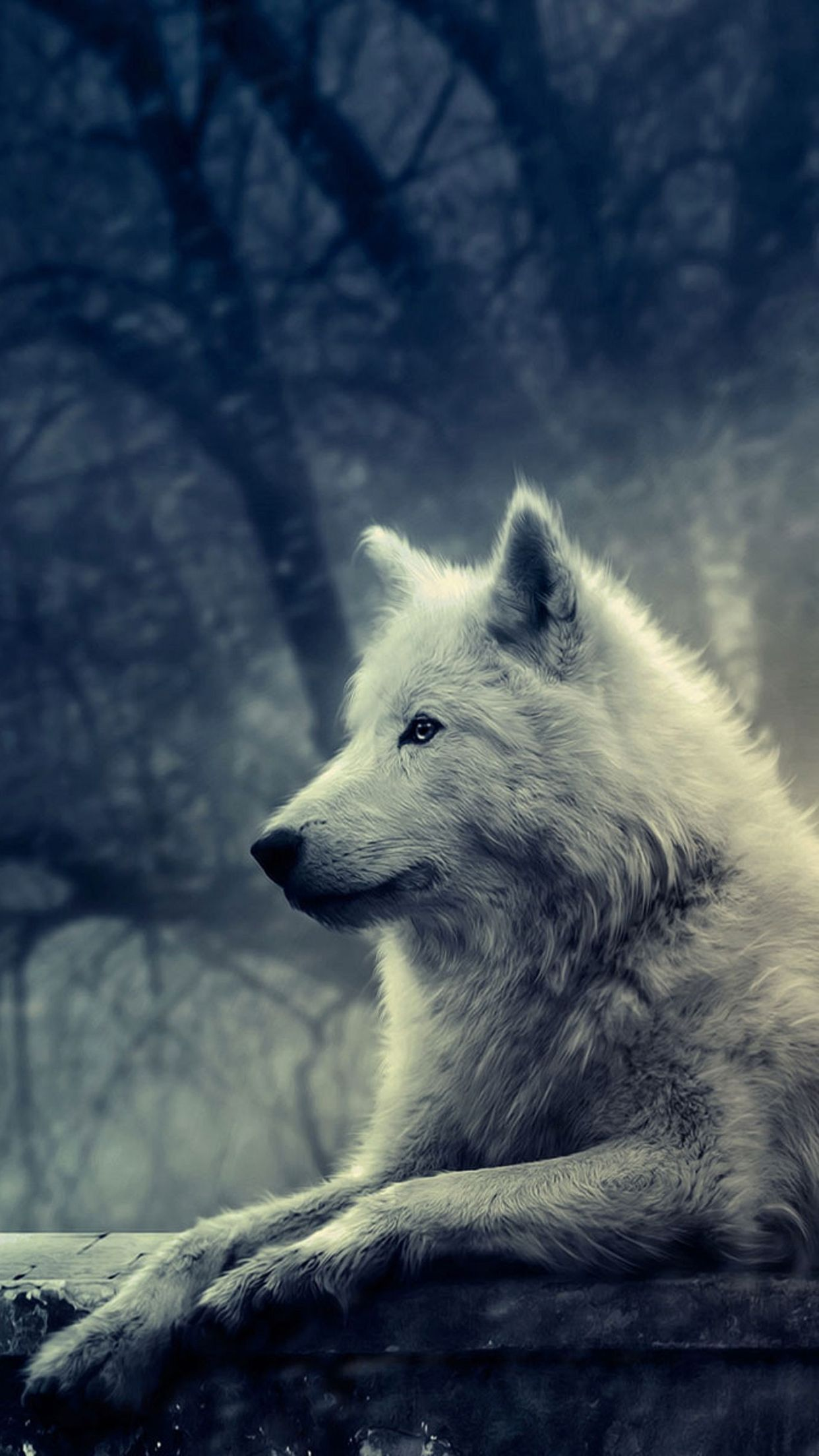 Game Of Thrones Wolf Wallpapers Top Free Game Of Thrones