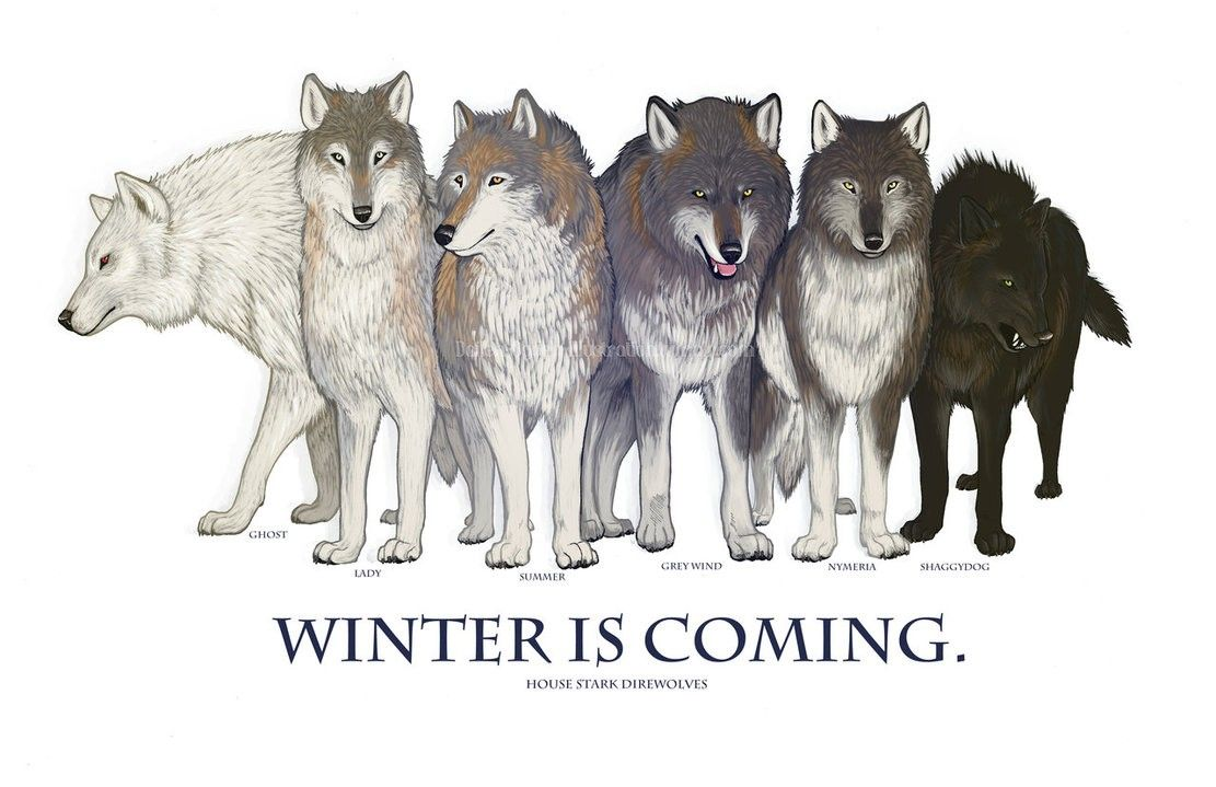 Game Of Thrones Wolf Wallpapers Top Free Game Of Thrones Wolf