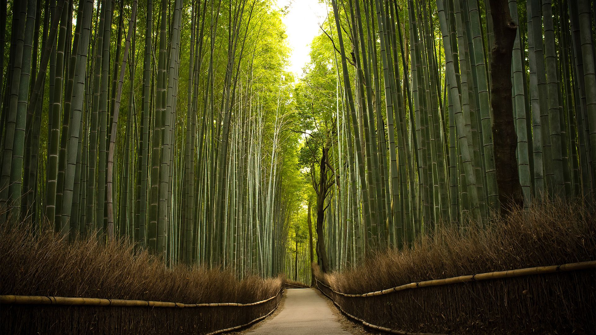 Hd Bamboo Wallpapers Top Free Hd Bamboo Backgrounds Wallpaperaccess