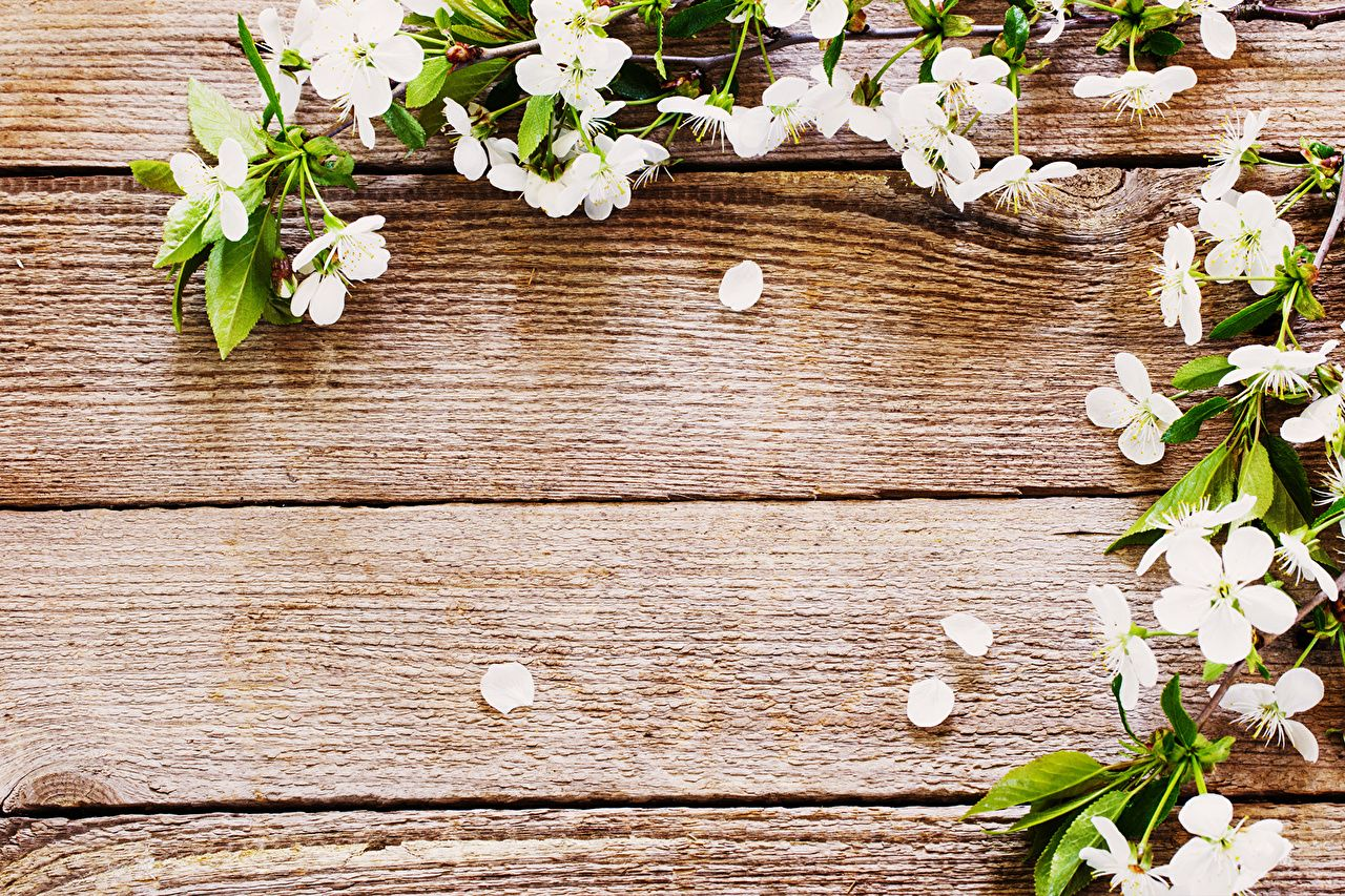 Rustic Flowers Wallpapers Top Free Rustic Flowers Backgrounds